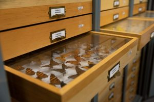 Entomology Drawers
