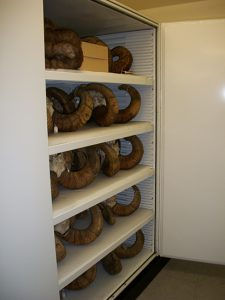 Zoology Museum Storage Cabinet