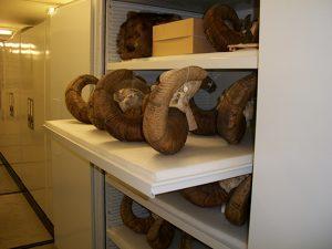 Zoology Museum Storage