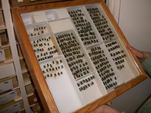 Entomology Museum Cabinets Delta Designs 01