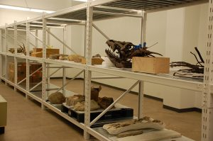 Geology Museum Storage Shelving