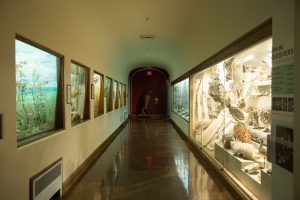 Zoology Museum Cabinets Delta Designs 01