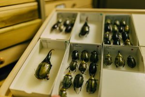Entomology Museum Storage