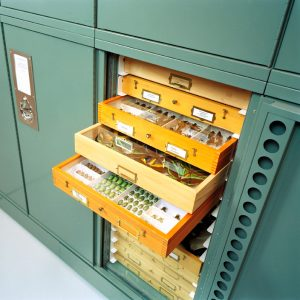 Entomology Museum Cabinets Delta Designs 03