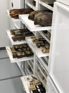 Mammology Specimen Cabinet – Zoology Museum Storage Cabinet – Mobile Compact Storage