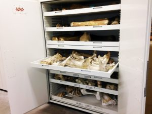 Paleontology Museum Storage – Delta Designs 01