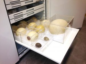 Zoology Museum Storage – Delta Designs 02