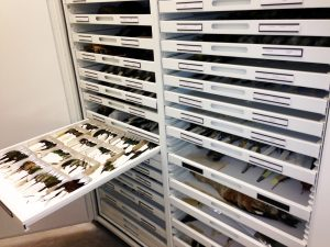 Zoology Museum Storage – Delta Designs 03