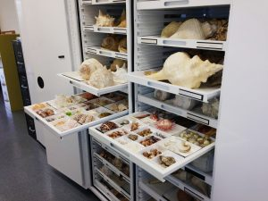 Zoology Museum Storage – Delta Designs 05