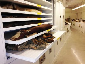 Zoology Museum Storage – Delta Designs